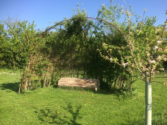 The Willow Bower
